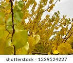 bright colors in the rainy... | Shutterstock . vector #1239524227