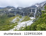 close views of the yangmaiyong... | Shutterstock . vector #1239531304