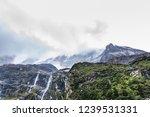 close views of the yangmaiyong... | Shutterstock . vector #1239531331