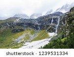 close views of the yangmaiyong... | Shutterstock . vector #1239531334