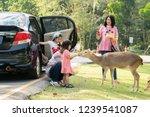 chiang mai  thailand   november ...   Shutterstock . vector #1239541087