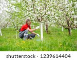 farmer covering the tree with... | Shutterstock . vector #1239614404
