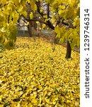 golden carpet from autumn leaves | Shutterstock . vector #1239746314