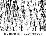 grunge texture of rough bark of ... | Shutterstock .eps vector #1239759094