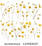 Stock photo pressed yellow wildflowers isolated on white background 123983029