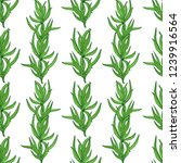 tarragon. plant. stem  leaves.... | Shutterstock . vector #1239916564
