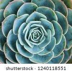 rectangular arrangement of... | Shutterstock . vector #1240118551
