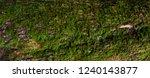 Moss Green Grunge  Texture....