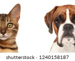 Stock photo kitten and puppy half of muzzle close up portrait isolated on a white background 1240158187