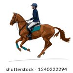 horse riding. female rider on a ...   Shutterstock .eps vector #1240222294