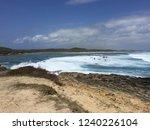 pointes des colibris  ... | Shutterstock . vector #1240226104