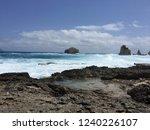 pointes des colibris  ... | Shutterstock . vector #1240226107