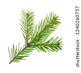 branch of silver fir isolated... | Shutterstock . vector #1240260757