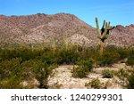 the sonora desert in central... | Shutterstock . vector #1240299301