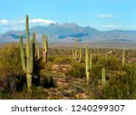 usury mountain park near... | Shutterstock . vector #1240299307