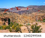 red ocotillo cactus blossoms in ... | Shutterstock . vector #1240299544
