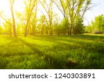 summer green forest glade in a... | Shutterstock . vector #1240303891