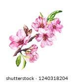 spring blossom flowers ... | Shutterstock . vector #1240318204