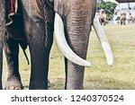 closeup of wonderful big strong ... | Shutterstock . vector #1240370524