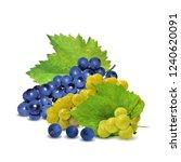 fresh  nutritious  tasty grapes.... | Shutterstock .eps vector #1240620091
