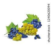 fresh  nutritious  tasty grapes.... | Shutterstock .eps vector #1240620094