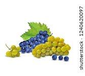 fresh  nutritious  tasty grapes.... | Shutterstock .eps vector #1240620097