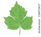 Illustration Of A Chaya Leaf ...