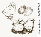 vector chick breeding hand... | Shutterstock .eps vector #1240867567