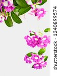 beautiful violet flowers on... | Shutterstock . vector #1240899574