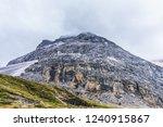 close views of the yangmaiyong... | Shutterstock . vector #1240915867