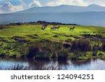 Zebras On Green Grassy Hill....