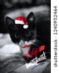 Stock photo cute little black with white christmas kitten a funny kitten with santa hat greeting card with a 1240952464