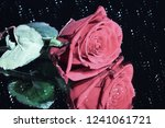red rose with specular...   Shutterstock . vector #1241061721
