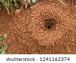 ant ground entrance with two... | Shutterstock . vector #1241162374