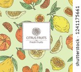 background with citrus fruitst  ... | Shutterstock .eps vector #1241175661