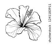 hawaiian hibiscus laser cut... | Shutterstock .eps vector #1241183911
