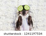 a dog takes a spa. relax. a dog ...   Shutterstock . vector #1241197534