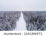 top down view of the forest in...   Shutterstock . vector #1241306971
