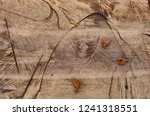 the texture of the trunk of a... | Shutterstock . vector #1241318551