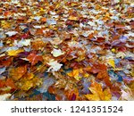 Smooched  Maple Leaves On Ground