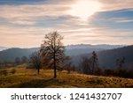 autumn landscape scene | Shutterstock . vector #1241432707