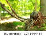 A Mythical Tree Woman Raises...