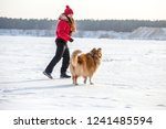 the collie dog running with... | Shutterstock . vector #1241485594