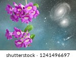 beautiful violet flowers on... | Shutterstock . vector #1241496697