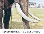 closeup of wonderful big strong ... | Shutterstock . vector #1241507497