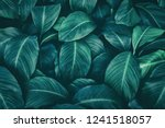 Tropical leaves  dark green...