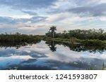 A Landscape View Of Everglades...