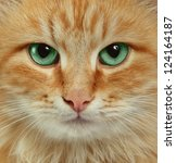Stock photo  cat portrait 124164187