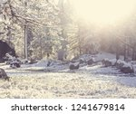 snow covered trees in the... | Shutterstock . vector #1241679814