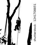 an arborist descends from tree... | Shutterstock . vector #1241708851